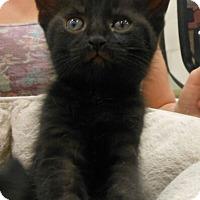 Adopt A Pet :: Colleen - Reston, VA