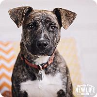 Adopt A Pet :: Breeze - Portland, OR