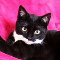 Adopt A Pet :: Tuesday - Warren, MI