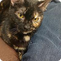 Adopt A Pet :: Gwendolyn - Duluth, GA