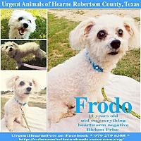 Adopt A Pet :: Frodo - Hearne, TX