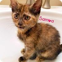 Adopt A Pet :: Samoa - York, PA