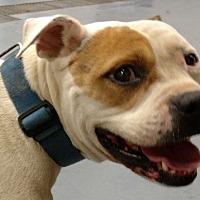 Adopt A Pet :: Spike | KGAC - Dahlgren, VA