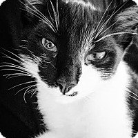 Adopt A Pet :: Storm - Columbus, OH