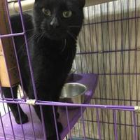 Adopt A Pet :: Hollyhock - Orleans, VT