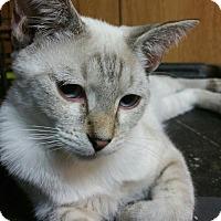 Adopt A Pet :: Eli - Morganton, NC