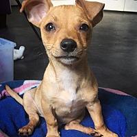 Adopt A Pet :: Benjamin - San Diego, CA