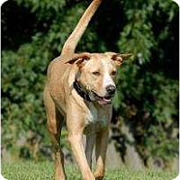 Adopt A Pet :: Casanova *Foster* - Ashland, VA