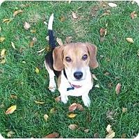 Adopt A Pet :: Maverick - Indianapolis, IN