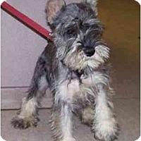Adopt A Pet :: Percy - Dayton, OH