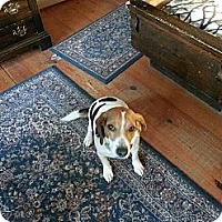 Adopt A Pet :: Archie- In CT - West Hartford, CT