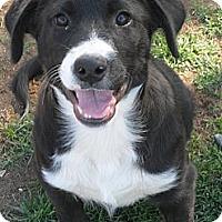 Adopt A Pet :: Morgan #5199 - Jerome, ID