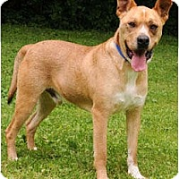Adopt A Pet :: Fred - Chicago, IL