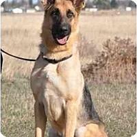 Adopt A Pet :: Bentley - Hamilton, MT