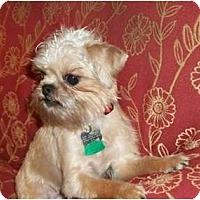 Adopt A Pet :: FOXY - ADOPTION PENDING - Cumming, GA