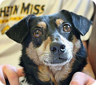 Dachshund Mix Dog for adoption in Groton, Massachusetts - Libby Lu