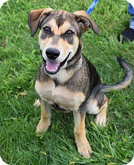 German Shepherd Dog/Husky Mix Dog for adoption in Lisbon, Ohio - Lola