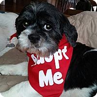 Adopt A Pet :: Bev - Mt Gretna, PA