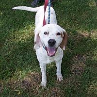 Adopt A Pet :: Maggie - st. jacob, IL