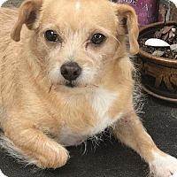 Adopt A Pet :: Phillipe - Costa Mesa, CA