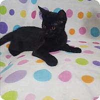Adopt A Pet :: Thomas - Port Huron, MI