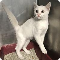 Adopt A Pet :: Wild Child - Newport, NC