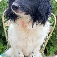 Adopt A Pet :: Melanie - Baileyton, AL