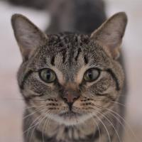 Adopt A Pet :: Rigby - Dodgeville, WI