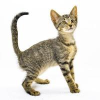 Adopt A Pet :: Binx - Oxford, MS