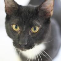 Adopt A Pet :: Nanook - Covington, LA