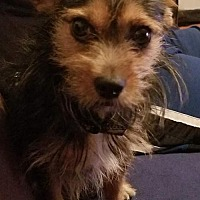 Adopt A Pet :: Joshua - Goodyear, AZ