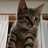Adopt A Pet :: Thunder - Phillipsburg, NJ