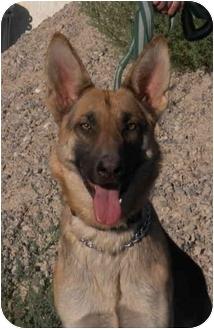 German Shepherd Dog Dog for adoption in Las Vegas, Nevada - Twiggy