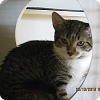 Adopt A Pet :: Evon - West Dundee, IL