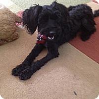 Adopt A Pet :: MOLLY - W. Warwick, RI