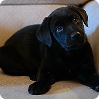 Adopt A Pet :: Cupid - Hamilton, ON