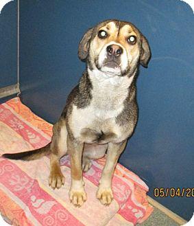 Husky Mix Dog for adoption in Warrenton, North Carolina - Cinnamon