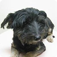 Adopt A Pet :: Grover - Gary, IN