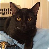 Adopt A Pet :: Moses - Houston, TX