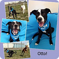 Adopt A Pet :: Otto - Meridian, ID