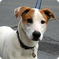 Adopt A Pet :: Millie - Erwin, TN