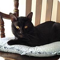 Adopt A Pet :: Mini Me - Oberlin, OH