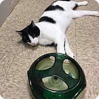 Adopt A Pet :: Corey-Adoption Pending! - Colmar, PA