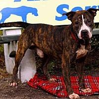 Adopt A Pet :: JACKSON - Sanford, FL