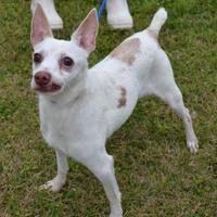 Adopt A Pet :: Luke - Thomasville, GA