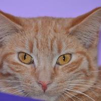 Adopt A Pet :: Darius - Elkhorn, WI
