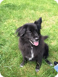 Border Collie Mix Dog for adoption in Milford, Pennsylvania - Flika