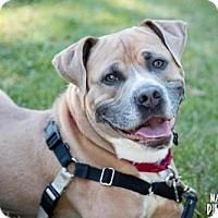Adopt A Pet :: Ty - Lockport, NY