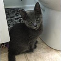 Adopt A Pet :: Jacob - Toronto, ON