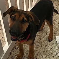 Adopt A Pet :: Stryker - Thousand Oaks, CA